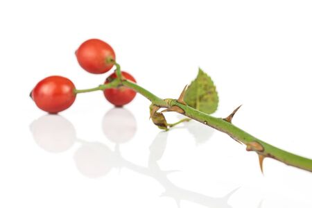 Group of three whole fresh red rosehip isolated on white background