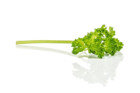 One piece of fresh green parsley isolated on white background