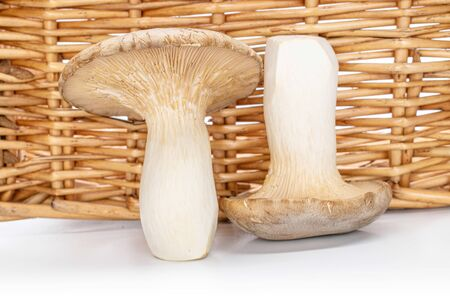 Group of two whole fresh creamy king trumpet mushroom isolated with braided rattan behind