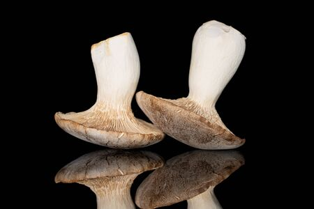 Group of two whole fresh creamy king trumpet mushroom isolated on black glass