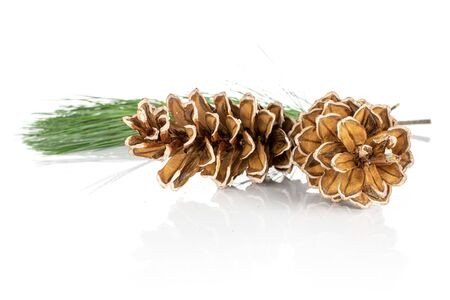 Group of two whole forest brown pine cone front focus isolated on white background