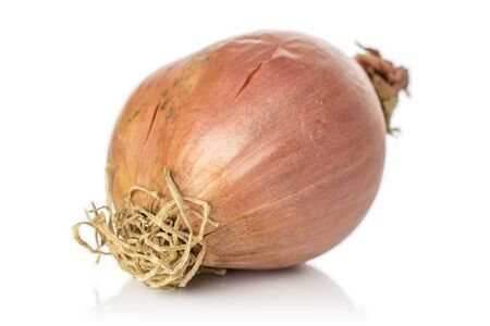 One whole fresh brown shallot isolated on white background