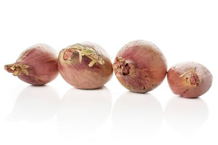 Group of four whole fresh brown shallot in row isolated on white background