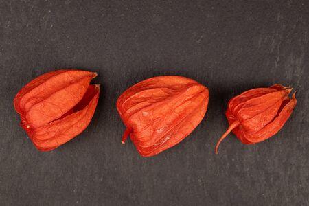 Group of three whole fresh orange physalis flatlay on grey stone
