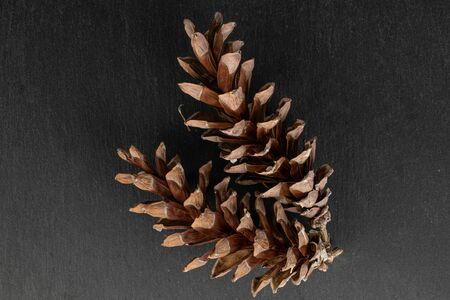 Group of two whole forest brown pine cone flatlay on grey stone