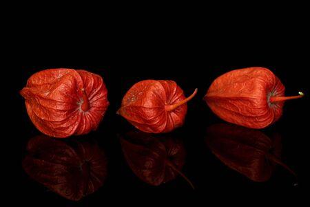 Group of three whole fresh orange physalis isolated on black glass