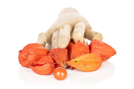 Lot of whole fresh orange physalis with wooden hand isolated on white background