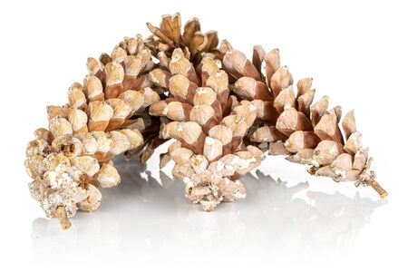 Group of three whole forest brown pine cone isolated on white background Фото со стока