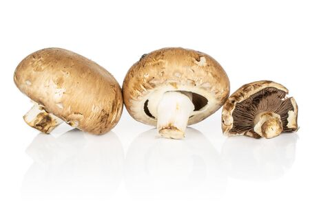 Group of three whole fresh brown mushroom champignon isolated on white background