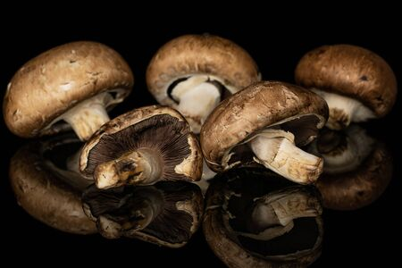Group of five whole fresh brown mushroom champignon isolated on black glass