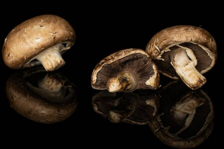 Group of three whole fresh brown mushroom champignon front focus isolated on black glass