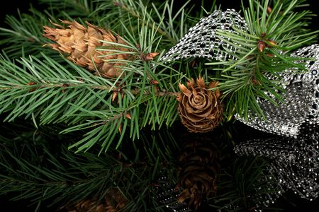 Lot of whole christmas green branch spruce two cones with gleaming ribbon isolated on black glass