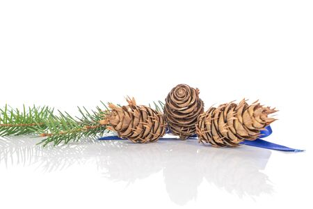 One whole christmas green branch spruce three cones with blue ribbon isolated on white background