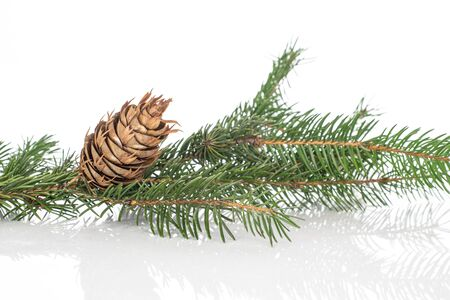 Lot of whole christmas green branch spruce isolated on white background