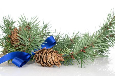 Lot of whole christmas green branch spruce with blue ribbon isolated on white background