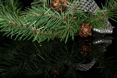 Lot of whole christmas green branch spruce with gleaming ribbon isolated on black glass Stok Fotoğraf