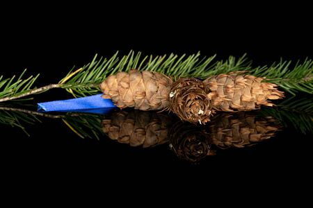 One whole christmas green branch spruce with blue ribbon isolated on black glass