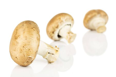 Group of three whole fresh brown champignon isolated on white background