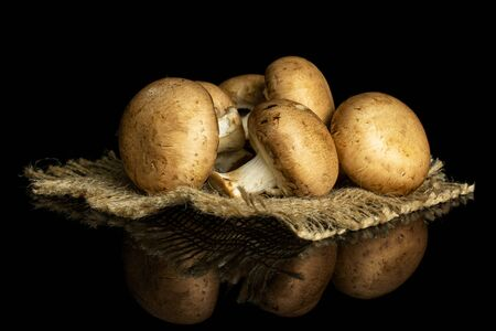 Group of five whole fresh brown champignon on natural sackcloth isolated on black glass