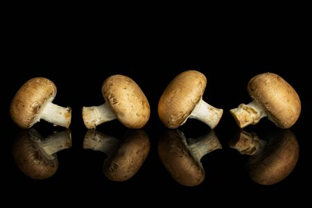 Group of four whole fresh brown champignon isolated on black glass Stock fotó