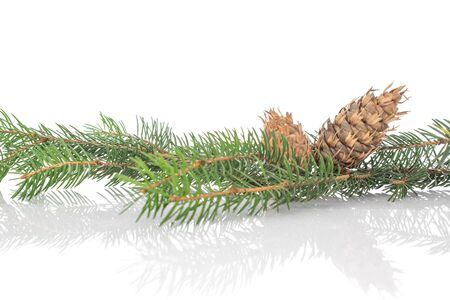 One whole christmas green branch spruce isolated on white background Stock Photo