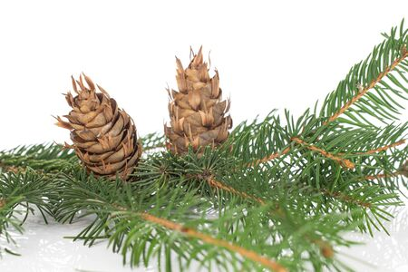 Lot of whole natural christmas green branch spruce two cones isolated on white background