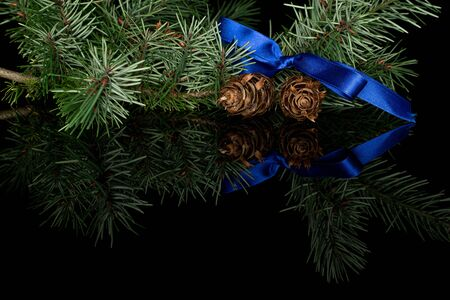 Lot of whole christmas green branch spruce with blue ribbon isolated on black glass