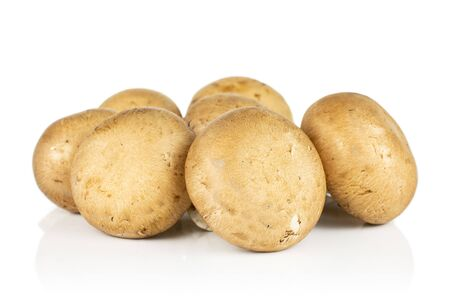 Group of six whole fresh brown champignon isolated on white background