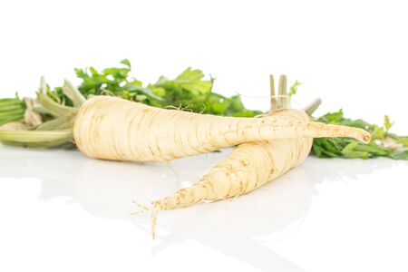Group of two whole hamburg white parsley root isolated on white background