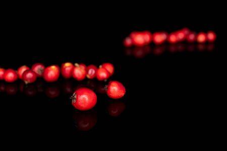 Sacco di fuoco frontale intero selvaggio rosso sorbo isolato su vetro nero Archivio Fotografico