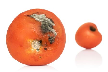 Group of two whole stale red tomato isolated on white background Zdjęcie Seryjne