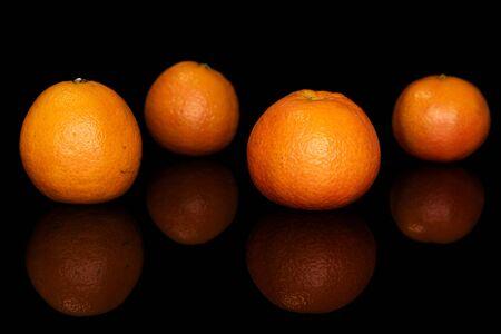 Group of four whole fresh orange mandarin isolated on black glass