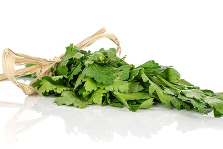 Lot of whole fresh green parsley with straw rope isolated on white background