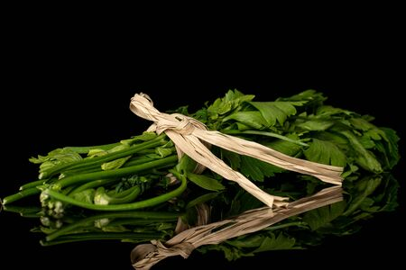 Lot of whole fresh green parsley with straw rope isolated on black glass