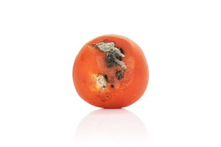 One whole stale red tomato isolated on white background