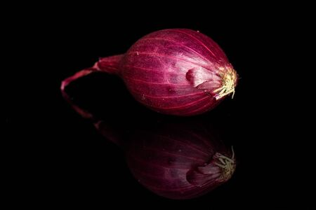 One whole small red onion bulb isolated on black glass