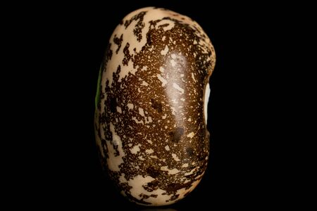 One whole raw speckled brown bean pinto isolated on black glass