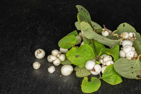 Lot of whole disordered white snowberry on grey stone