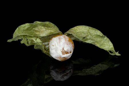 One whole moldy fresh orange physalis isolated on black glass Reklamní fotografie - 136233747