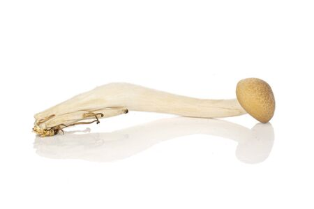 One whole shimeji brown mushroom isolated on white background