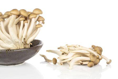 Lot of whole shimeji brown mushroom in glazed bowl isolated on white background