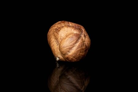 One whole tasty brown hazelnut isolated on black glass