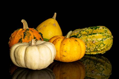 Group of five whole beautiful decorative gourd isolated on black glass