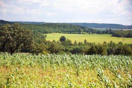 Beauty of young wheat field Zdjęcie Seryjne