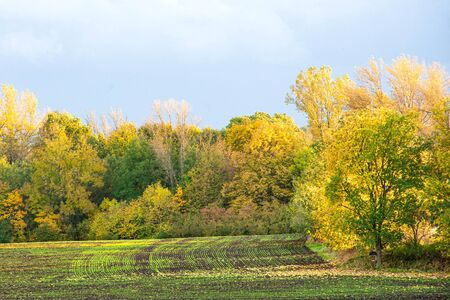 Bright autumn field with golden trees behind Stock Photo