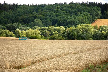 Golden wheat field landscape Stock Photo
