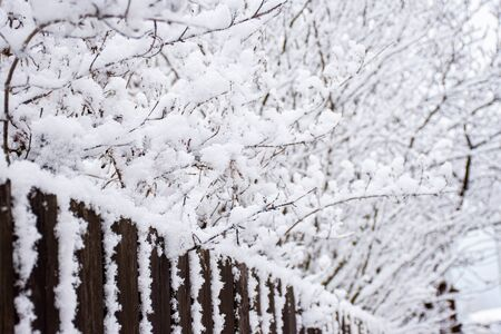 Winter snow on trees with a fence