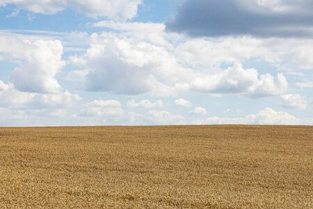 Beauty of golden wheat field with cloudy sky