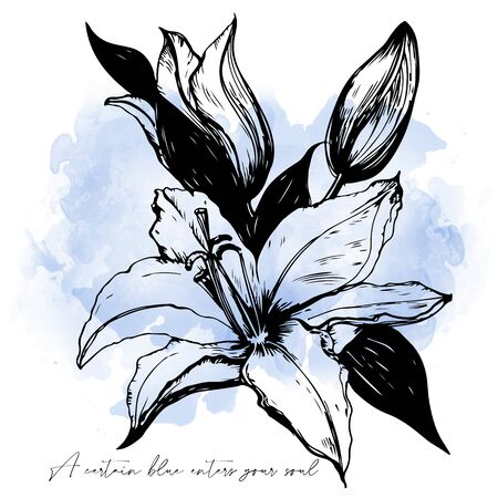 shabby outline Illustration of the lily with watercolor drop. Hand Drawn doodle vector illustration. Sketch for tattoo, postcard, t-shirt, fabric bag, poster. Animal collection. 일러스트