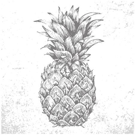 Pineapple Illustration. Monochrome abstract vector grunge texture. White and black illustration. Sketch abstract to Create Distressed Effect. Overlay Distress grain design. Stylish modern background